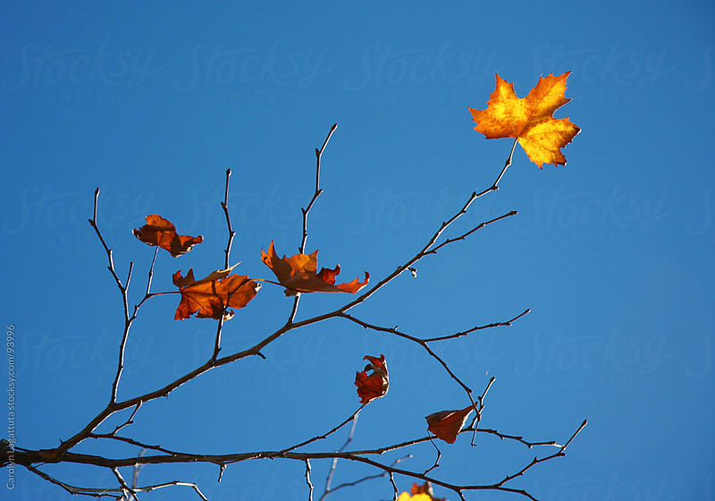Barren tree with a few leaves left hanging on by Carolyn Lagattuta for Stocksy United
