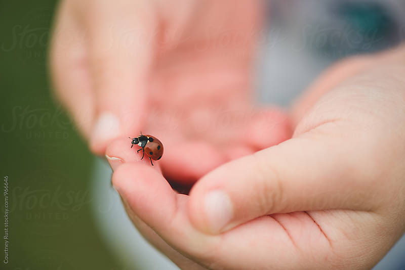 Child Playing with ladybug by Courtney Rust for Stocksy United