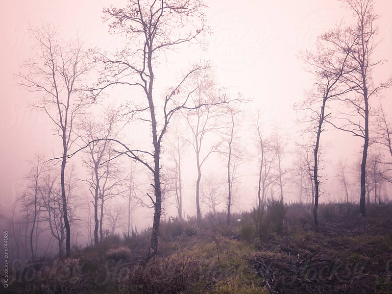Forest in the fog by Simone Becchetti for Stocksy United