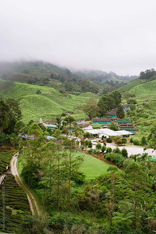 Cameron Highlands tea plantation by Alita Ong for Stocksy United