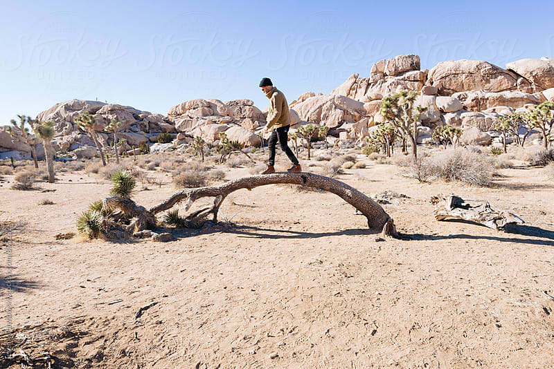 Man on tree in Joshua Tree National Park, California by Jeremy Pawlowski for Stocksy United