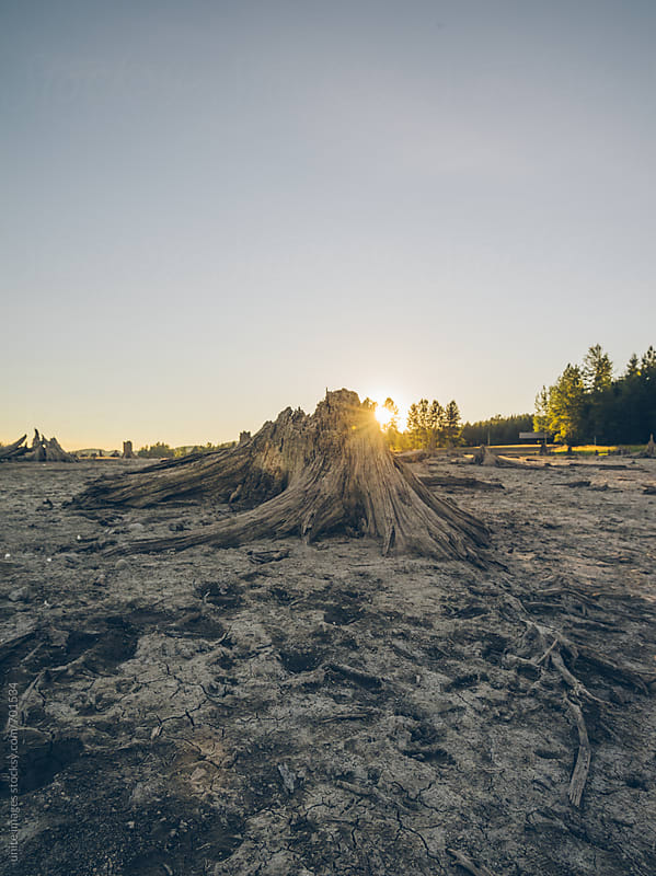 dead wood and drought land by unite  images for Stocksy United