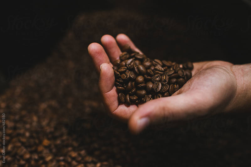 Hand holding roasted coffee beans by Evan Dalen for Stocksy United