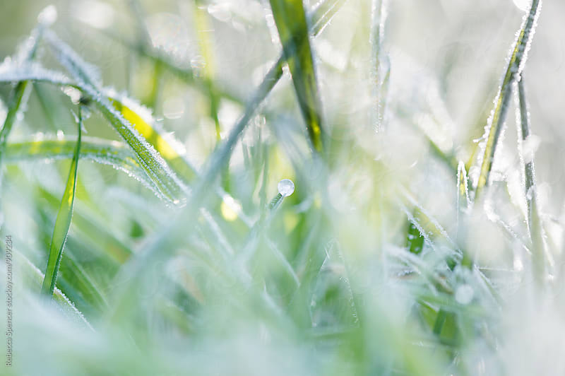 Frosty grass by Rebecca Spencer for Stocksy United