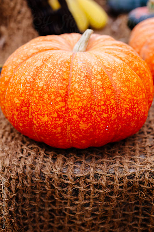 Pumpkin on a rustic background by Andrey Pavlov for Stocksy United
