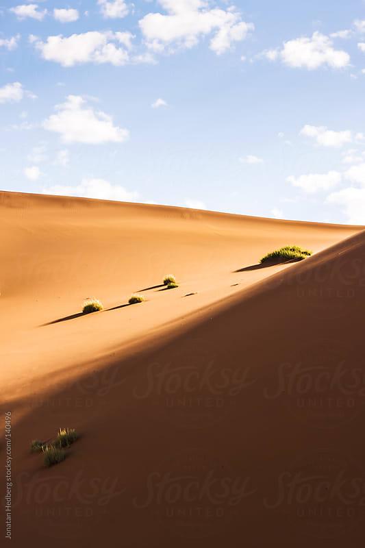 Life in the desert by Jonatan Hedberg for Stocksy United