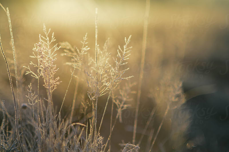 Grass covered in frost at sunrise by Kirstin Mckee for Stocksy United