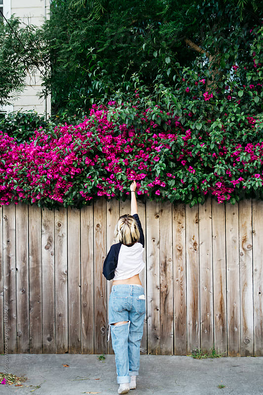 Young female woman girl reaches high to pick flower above fence by Jesse Morrow for Stocksy United