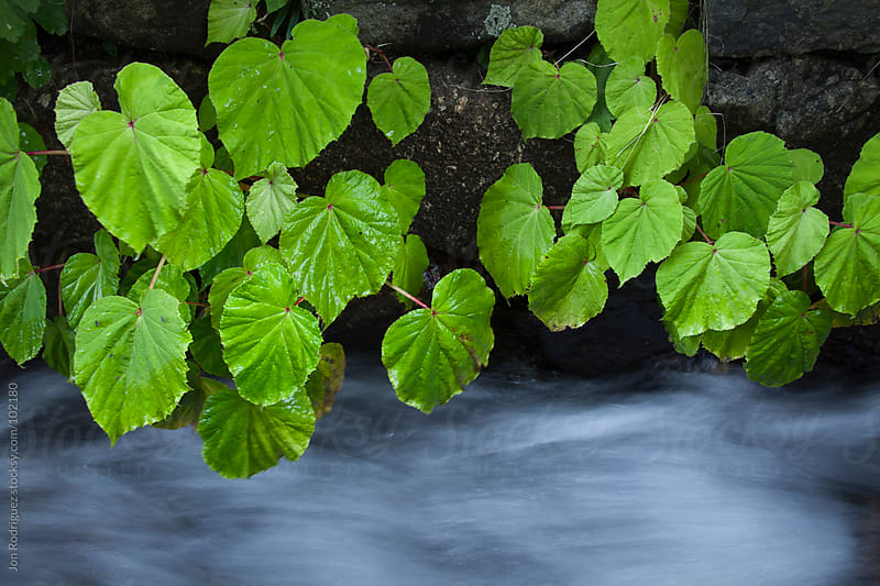 Plants in a  canal, Magome, Japan by Jon Rodriguez for Stocksy United