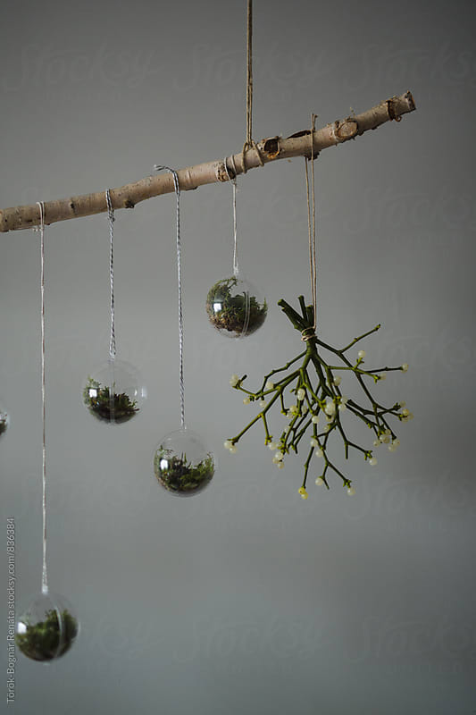 Home decoration with mistletoe by Török-Bognár Renáta for Stocksy United