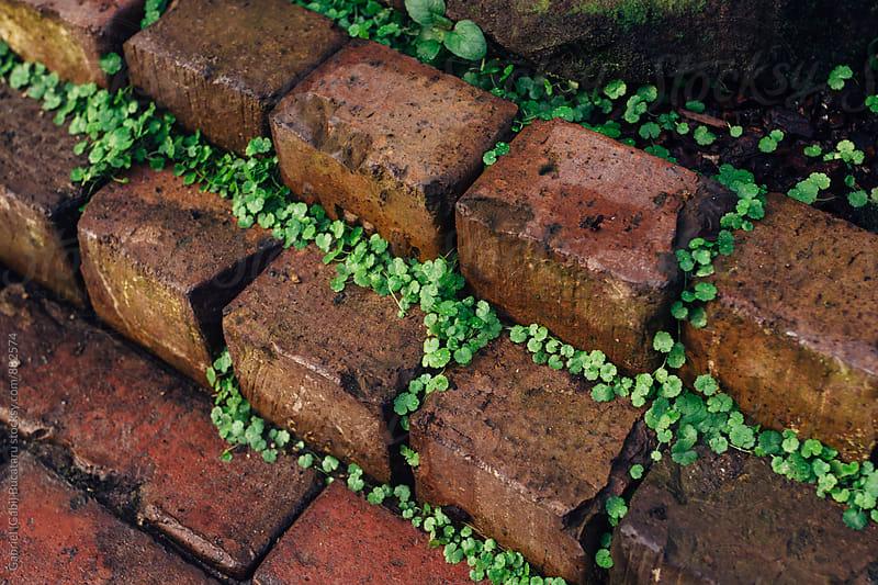 Bricks with plants on a pavement by Gabriel (Gabi) Bucataru for Stocksy United