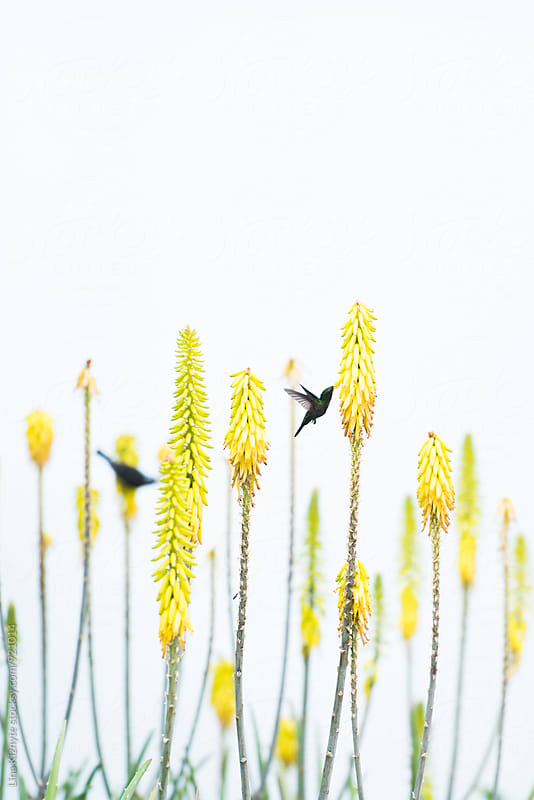 Two birds on yellow flowers by Lina Kiznyte for Stocksy United