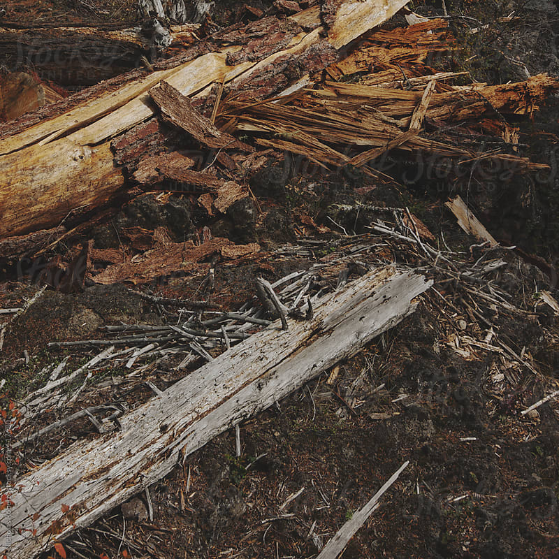 Fallen Trees by Nicholas Roberts for Stocksy United