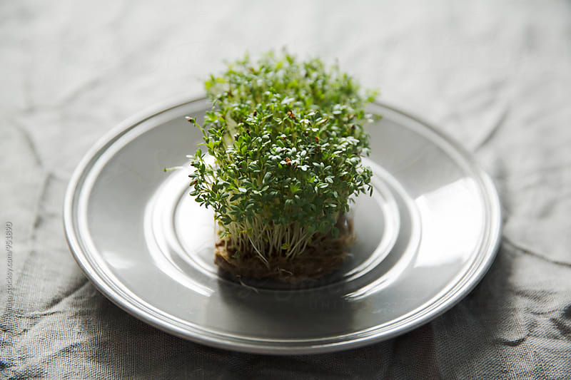 Cress by Török-Bognár Renáta for Stocksy United