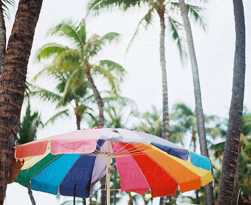 colorful rainbow beach umbrella with palm trees by wendy laurel for Stocksy United
