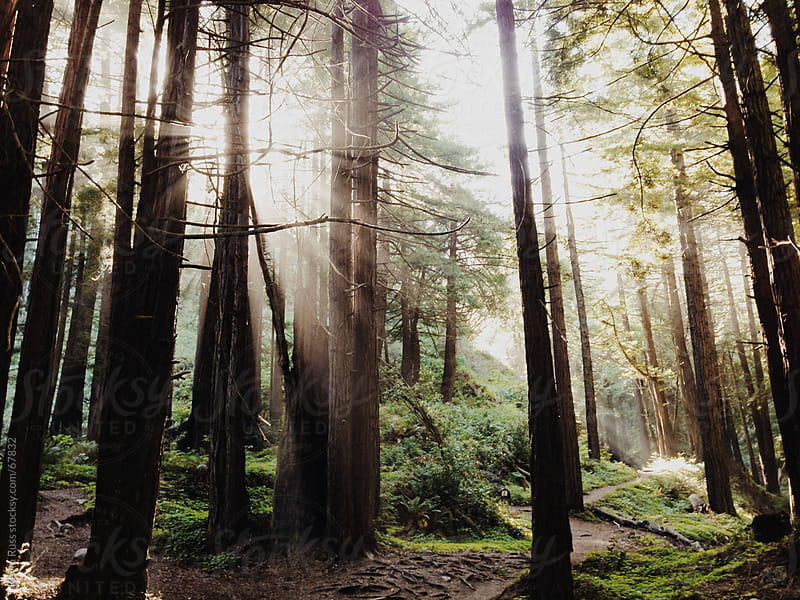 Morning Sun Rays in the Forest by Kevin Russ for Stocksy United