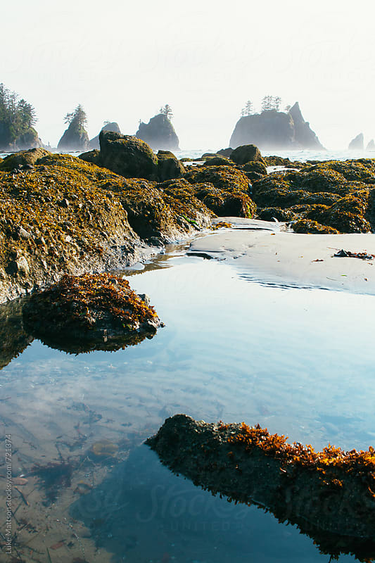 A Clear And Calm Tidal Pool On The Pacific Coast by Luke Mattson for Stocksy United