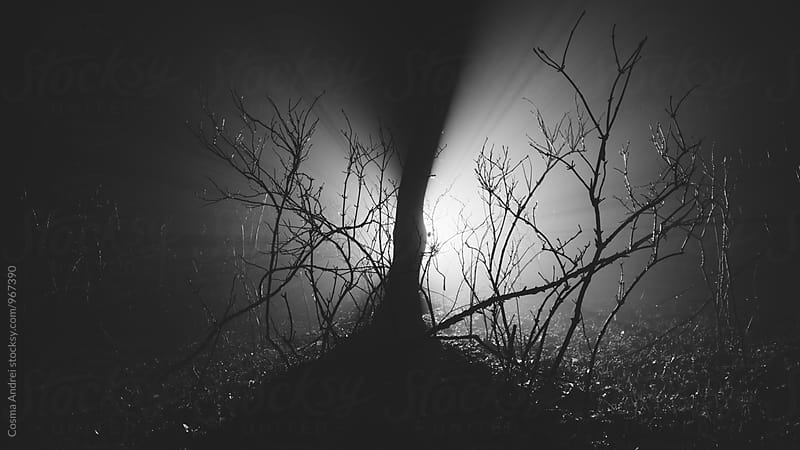 Forest at night with mysterious fog and light by Cosma Andrei for Stocksy United