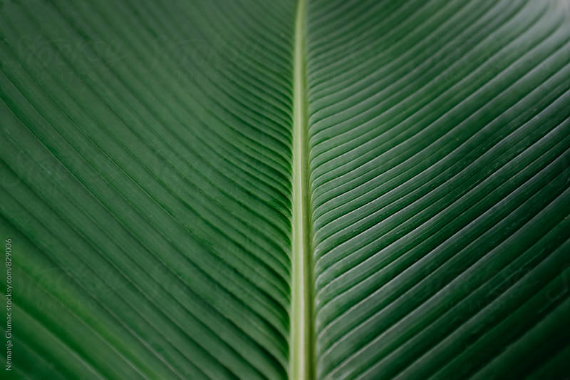 Beautiful Dark Green Leaf Texture by Nemanja Glumac for Stocksy United