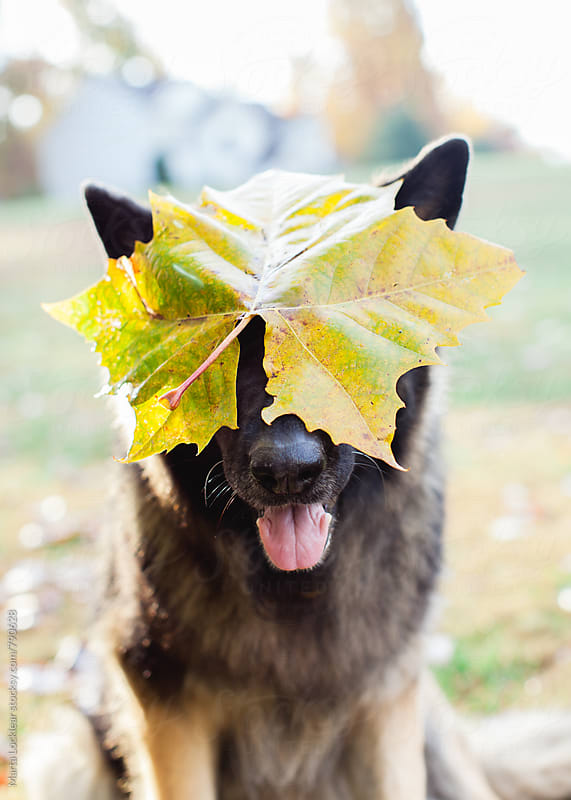 Dog Leaf Costume by Marta Locklear for Stocksy United