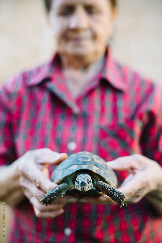 Senior woman holding a turtle in hand by GIC for Stocksy United