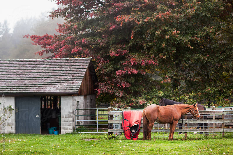 Horses in a farm by Suprijono Suharjoto for Stocksy United