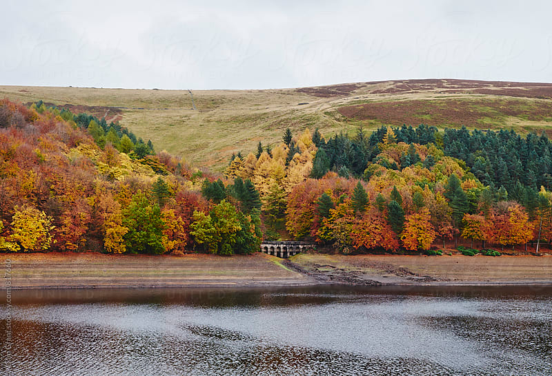 Autumnal trees at Derwent Reservoir. Derbyshire, UK. by Liam Grant for Stocksy United
