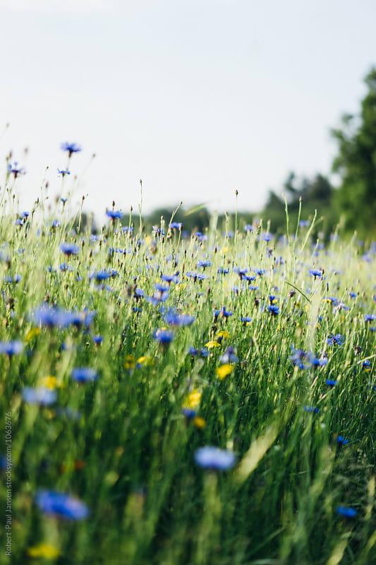 Summer Flowers by Robert-Paul Jansen for Stocksy United