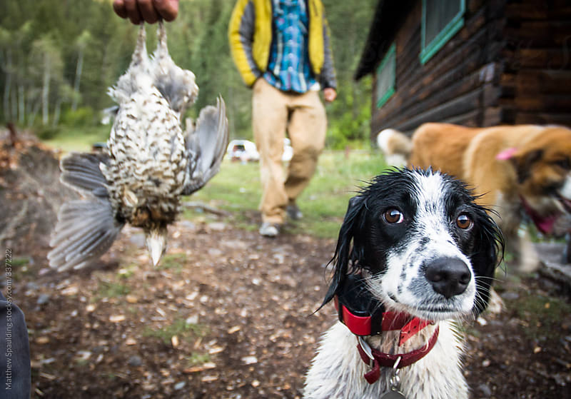 Hunting dog with wild game bird outdoors by Matthew Spaulding for Stocksy United