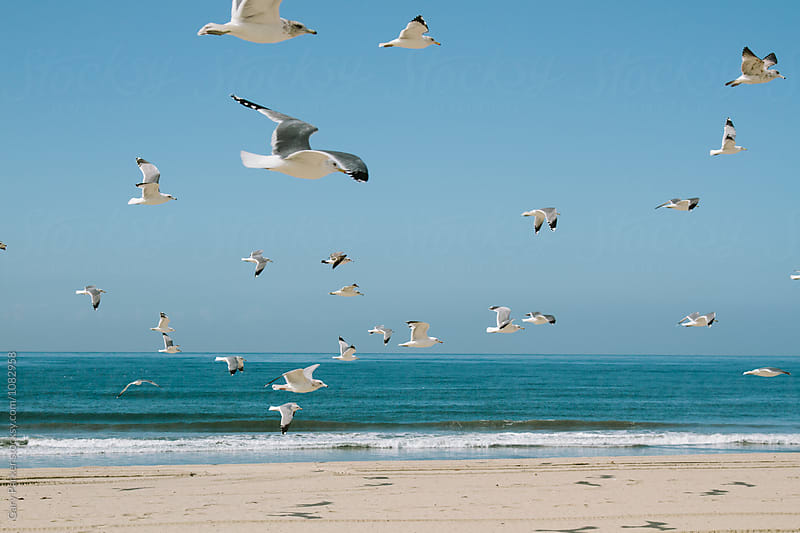 Seagulls in flight by Gary Parker for Stocksy United