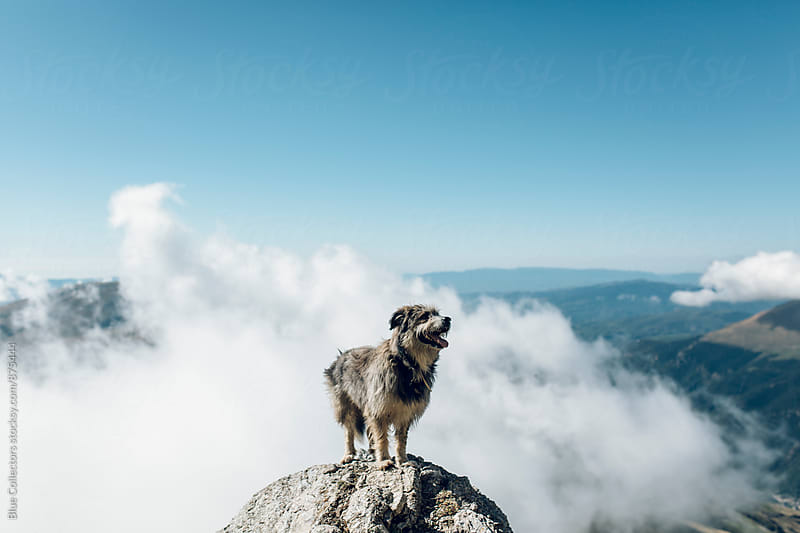 Mountain dog on top of the rocks by Jordi Rulló for Stocksy United