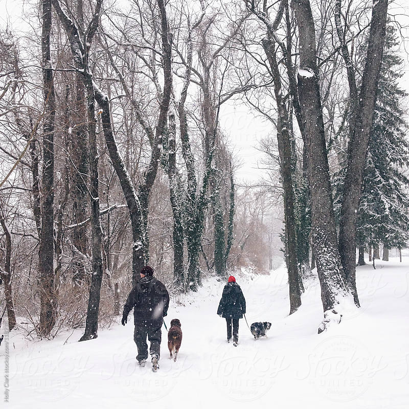Two people walk their dogs down a snowy lane. by Holly Clark for Stocksy United