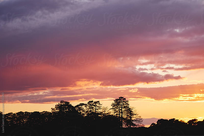Colourful clouds and tree silhouette at sunset. Norfolk, UK. by Liam Grant for Stocksy United