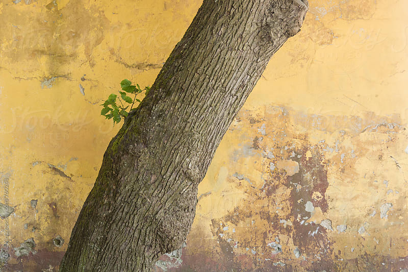 Tree trunk with leaves before yellow decaying wall by Melanie Kintz for Stocksy United