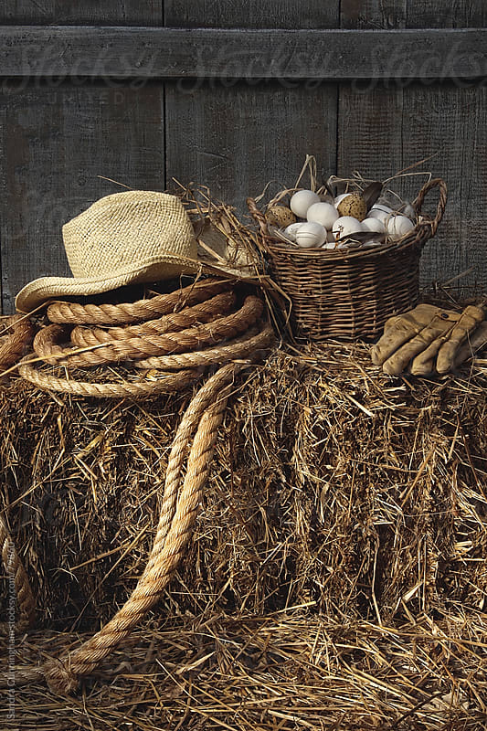 Basket of eggs on straw in the barn by Sandra Cunningham for Stocksy United