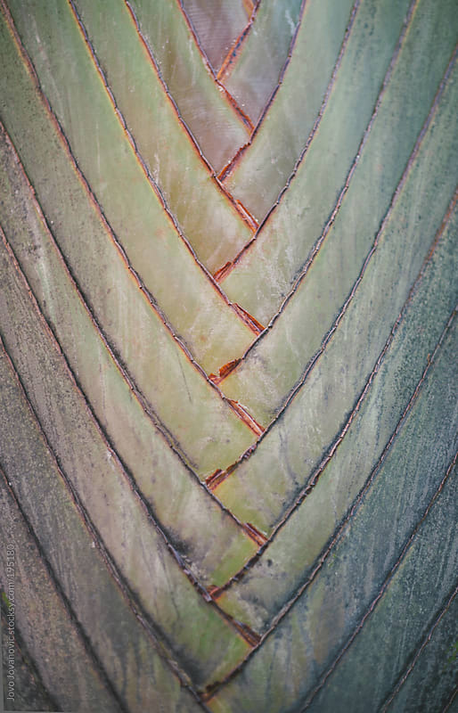 Nature - close-up of a green palm leaf by Jovo Jovanovic for Stocksy United