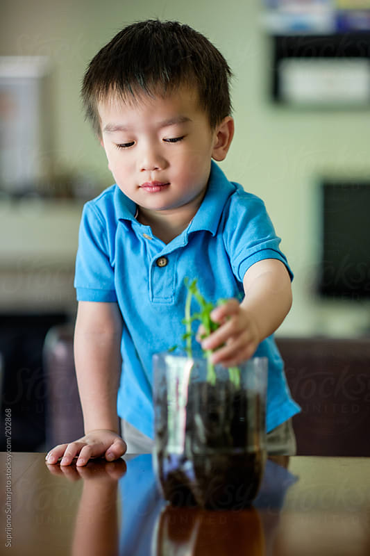 Asian boy watching the growth of his plant as part of the science project by Suprijono Suharjoto for Stocksy United