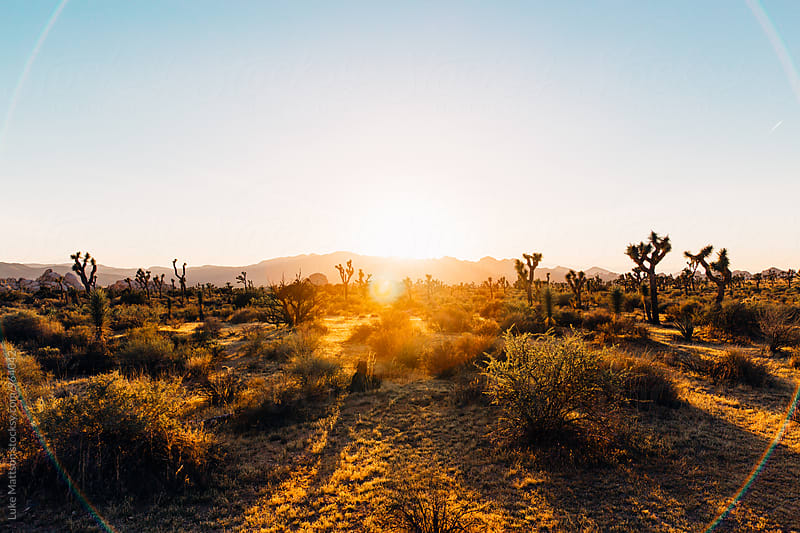 Sunset Flare Over Joshua Tree National Park Desert Landscape by Luke Mattson for Stocksy United