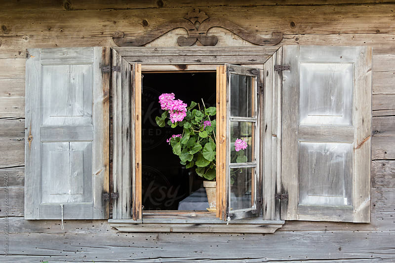 Pink Geranium in a wooden window in rural Lithuania by Melanie Kintz for Stocksy United