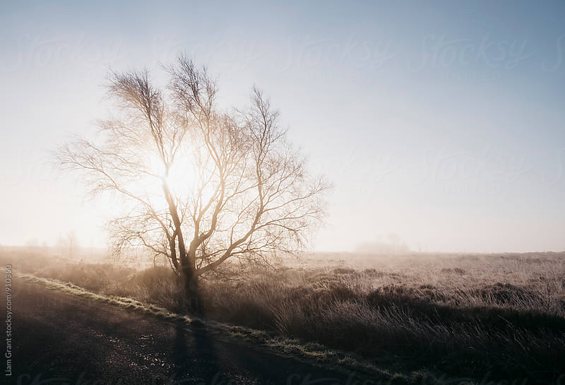 Sunrise behind a frozen tree on Beeley Moor. Derbyshire, UK. by Liam Grant for Stocksy United