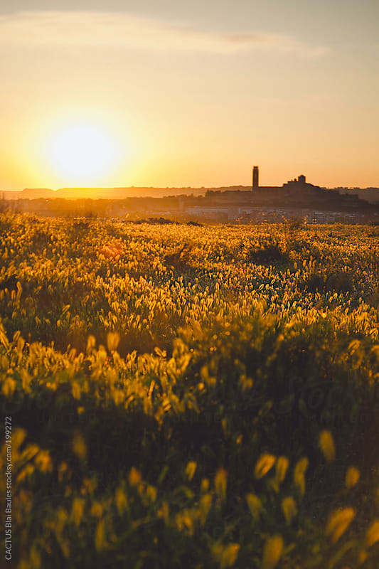 View of Lleida city at sunset. by CACTUS Blai Baules for Stocksy United
