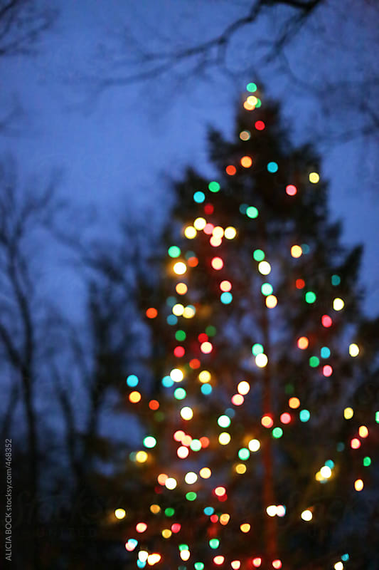 An Outdoor Christmas Tree Covered In Lights by ALICIA BOCK for Stocksy United