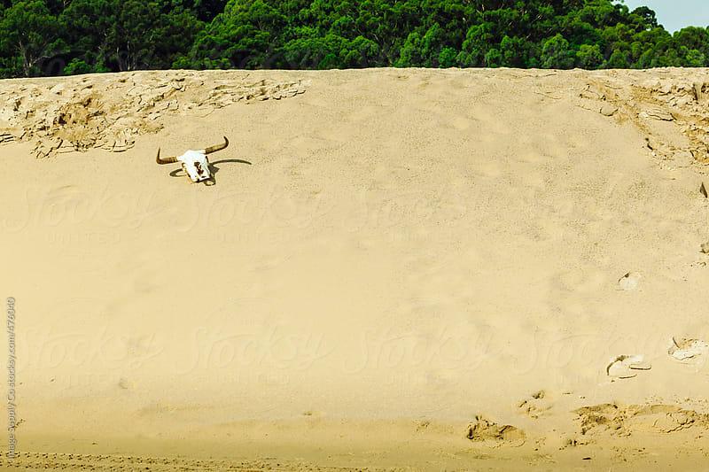 Bull skull on sand dune by Image Supply Co for Stocksy United
