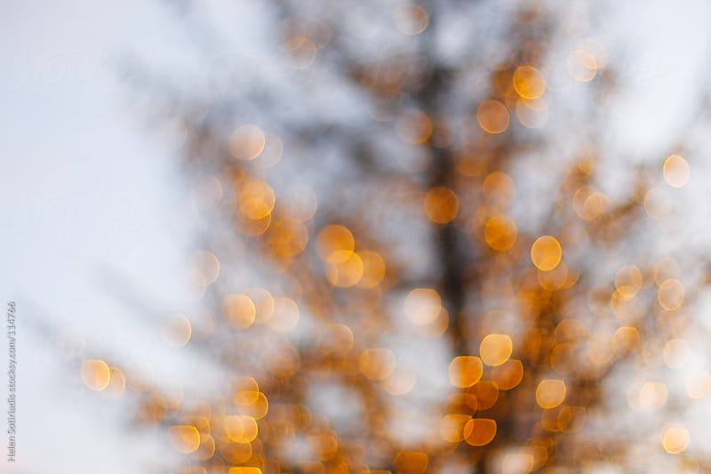 holiday tree with lights by Helen Sotiriadis for Stocksy United