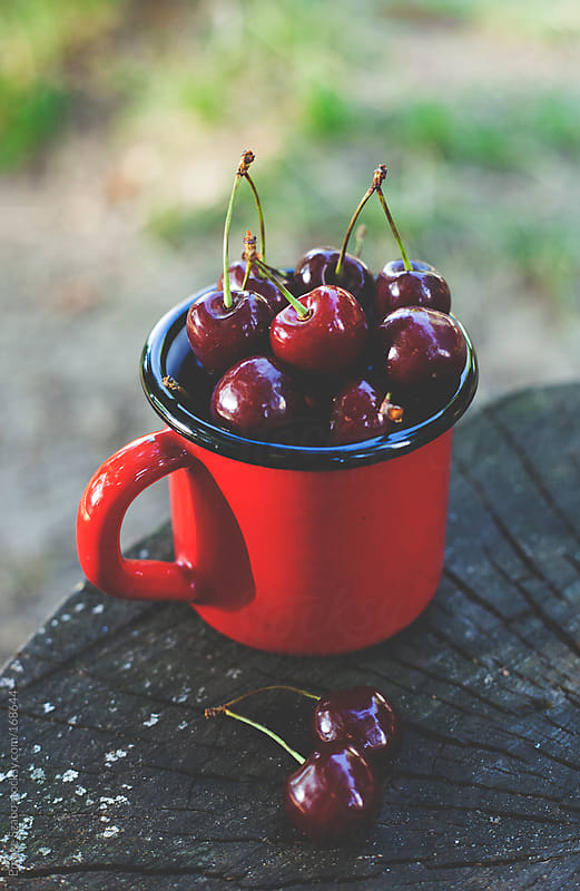 Sweet cherries in red mug by Emoke Szabo for Stocksy United