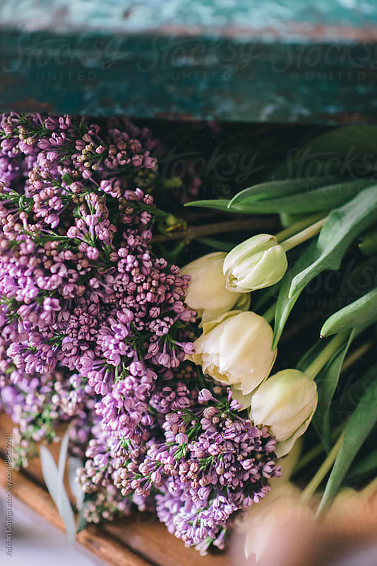 Tulips and lilacs by Adrian Cotiga for Stocksy United