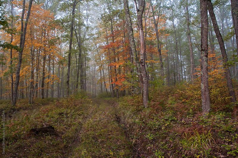 Beaten path among the trees by Sveta SH for Stocksy United