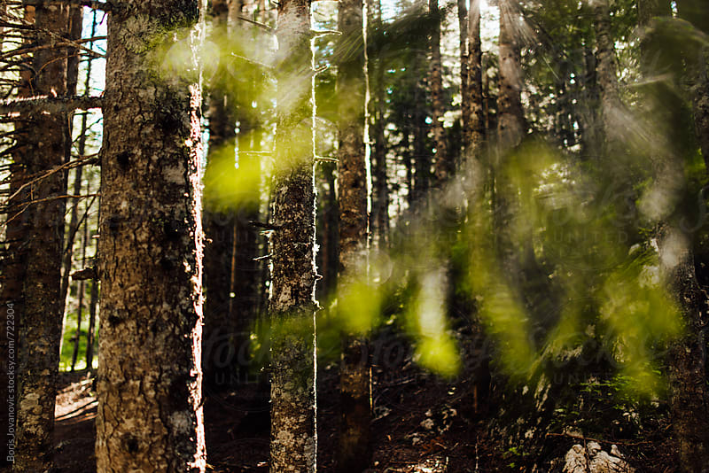 Mountain forest by Boris Jovanovic for Stocksy United