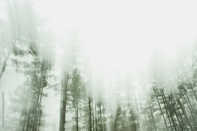 Abstract, conceptual environment landscape of green pine trees in the fog by Tom Eells for Stocksy United