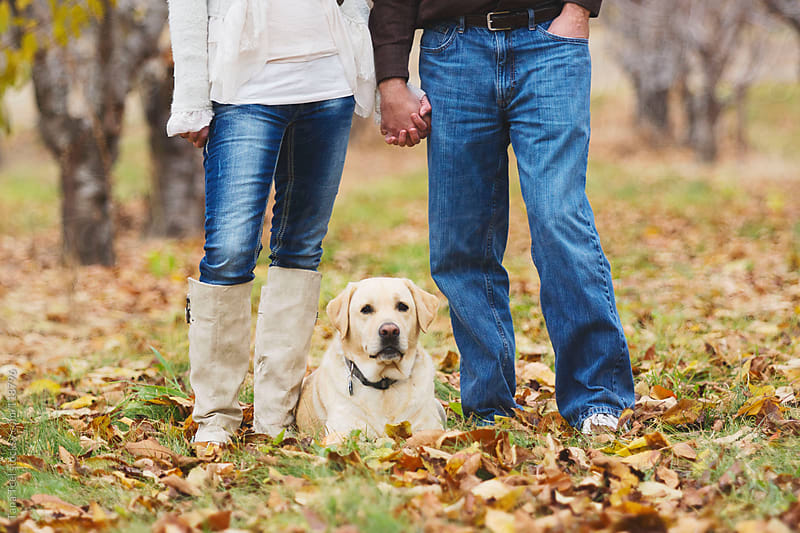 A couple holds hands while their golden Labrador lays between them by Tana Teel for Stocksy United
